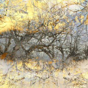 עצים בשחור על רקע זהוב ואפור